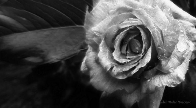 PicsArt_08-11-09.46.18