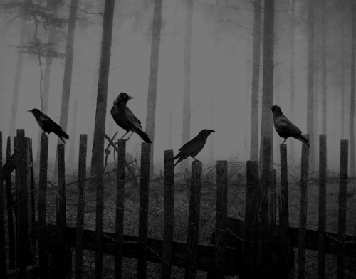 black-and-white-creepy-crow-darkness-favim-com-2414795-1